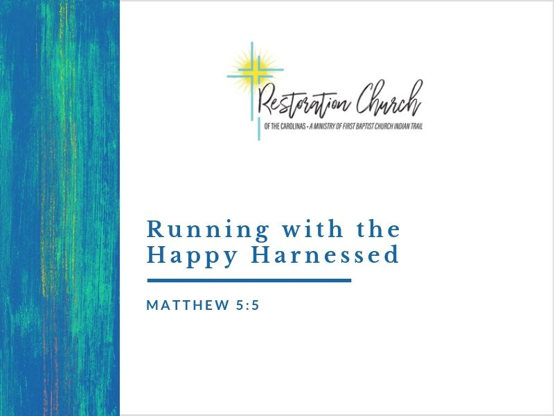 Running with the Happy Harnessed Image